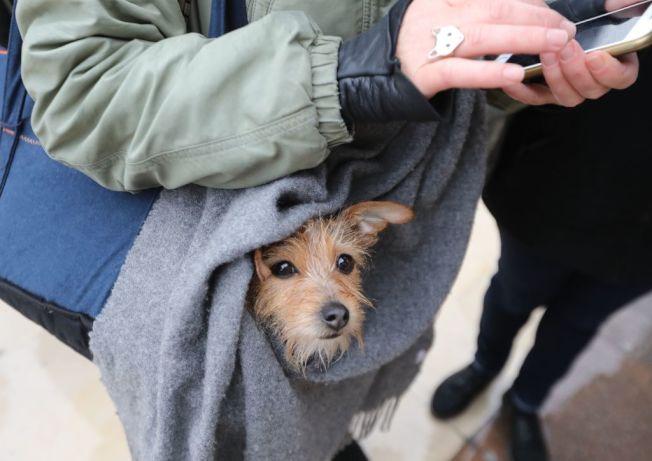 「育寵物假」的風潮正在企業之間展開。(Getty Images)