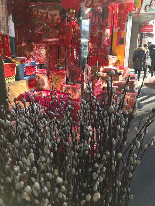 迎春的吉祥植物銀柳。(熊傳慧/攝影)