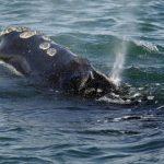 400移民法官無薪領  士氣跌到最低點  拯救鯨魚也停擺