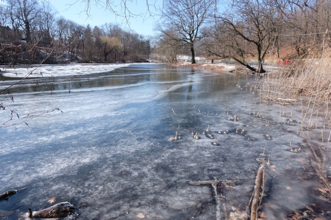 紐約海邊出現冰凍現象,潮水起落帶來冰雪交融的景象。(記者曹健/攝影)