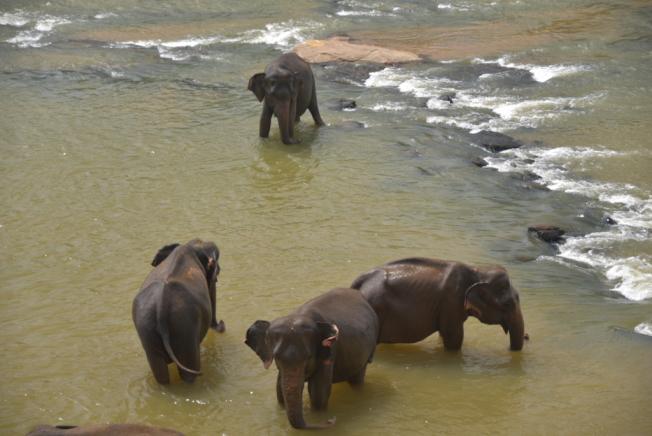 大象孤兒院。