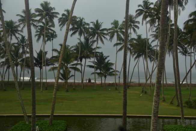 海灘遍布椰樹。