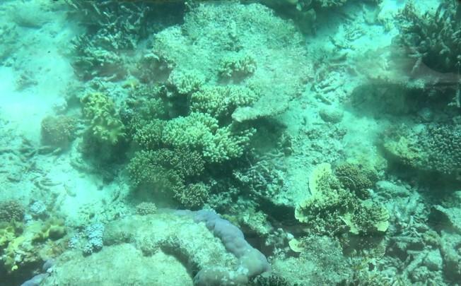 透過玻璃船底的多彩多姿的海底世界。