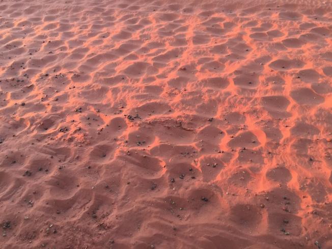沙漠中的駱駝腳印。