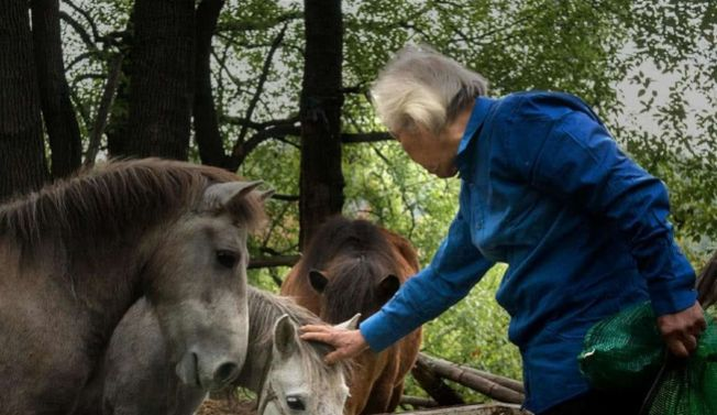 羅應玖在餵動物園的馬。(取材自微信)