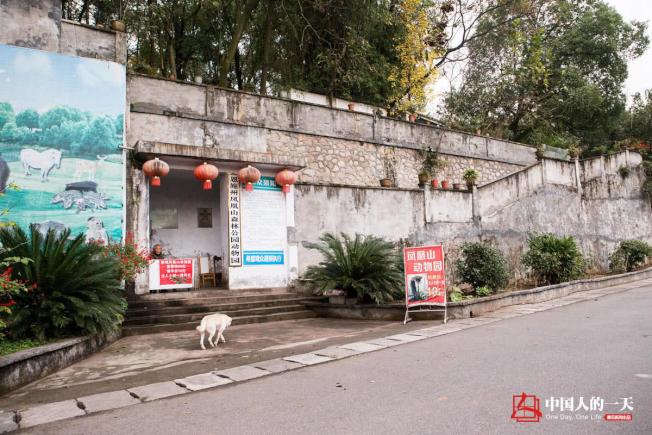 羅應玖的動物園建在公園內。(取材自微信)