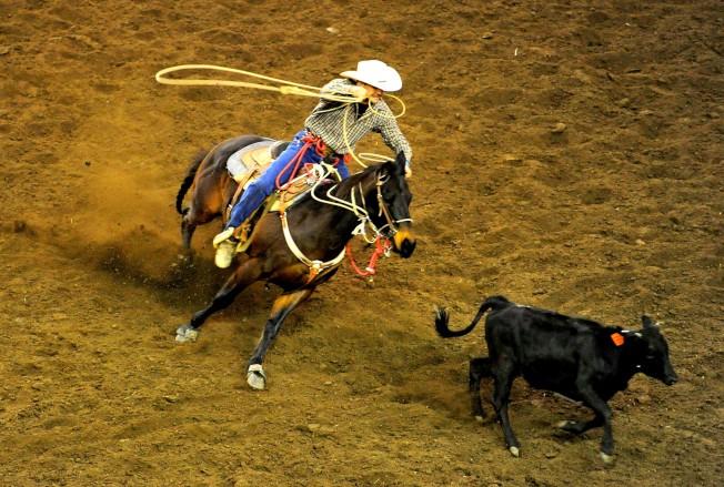 賓州農業博覽會過去的牛仔表演。 (新華社資料照片)