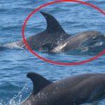 又見偉大母愛!母海豚背著孩子屍體游數日