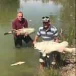 澳洲熱浪 熱死百歲大魚