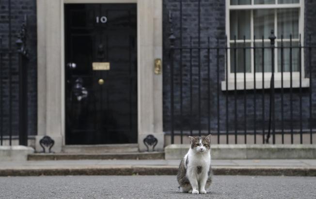 英國的寵物保險普及率達到20%,圖為唐寧街10號首相官邸貓賴瑞。(美聯社)