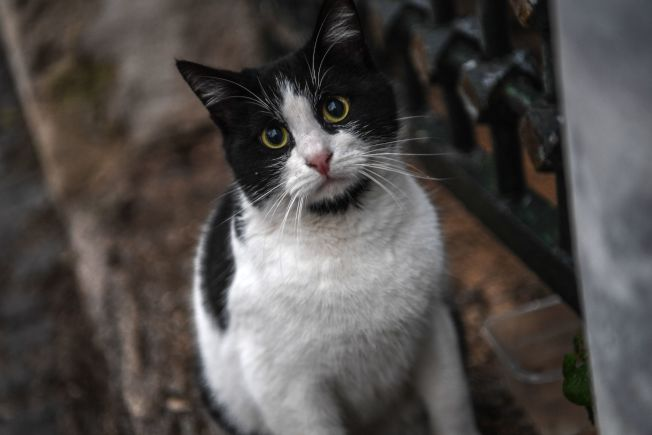 為貓買保險的主人比較少。(Getty Images)