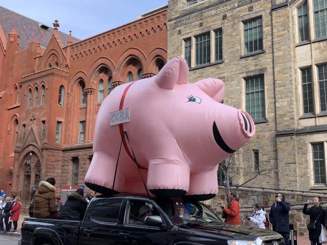 巨型豬年氣球在遊行中格外搶眼。(記者張筠 / 攝影)