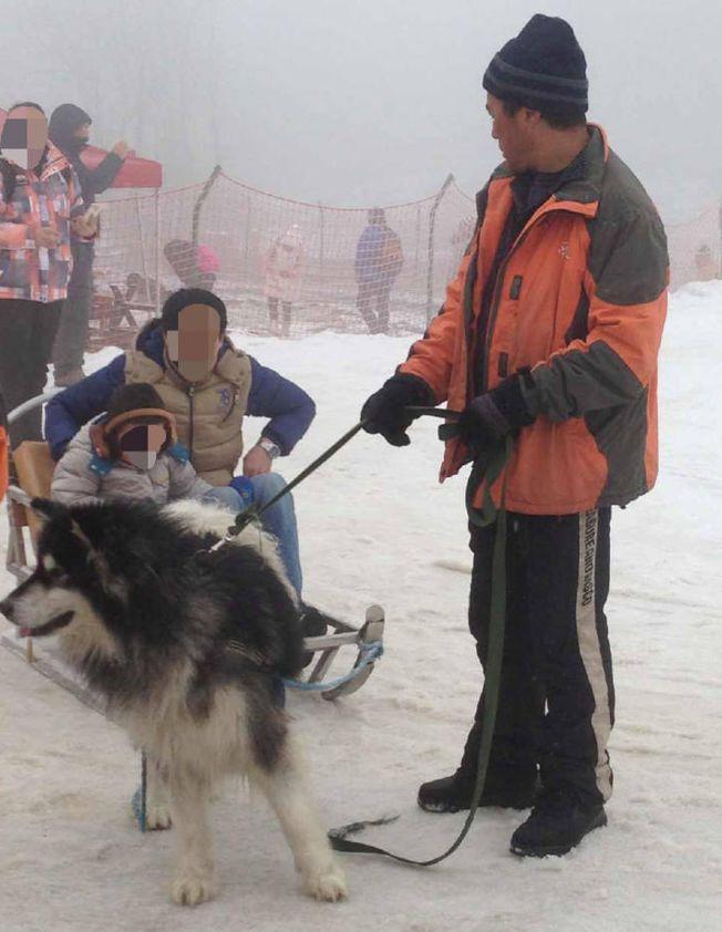 四川西嶺雪山「狗拉雪橇」項目近日惹上爭議。(取材自上游新聞)