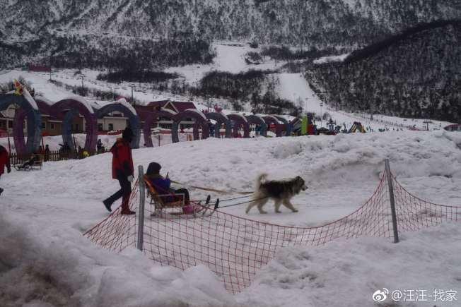 四川西嶺雪山「狗拉雪橇」項目近日惹上爭議。(取材自微博)