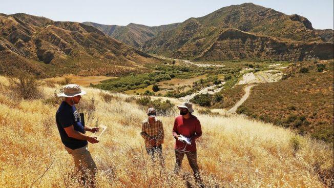 加大研究人员Shane Dewees(左起)、Stephanie马与Sameer Saroa检查位于洛斯派瑞丝国家森林Piru湖附近原生丛林修复地点。(洛杉矶时报)