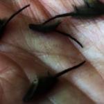 紐西蘭發現神祕絨毛生物 這回專家也無解