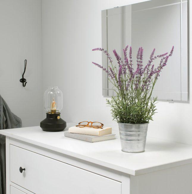5種植物放臥室 讓你更好睡
