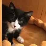封面故事|貓咪咖啡館 療癒、公益一起來
