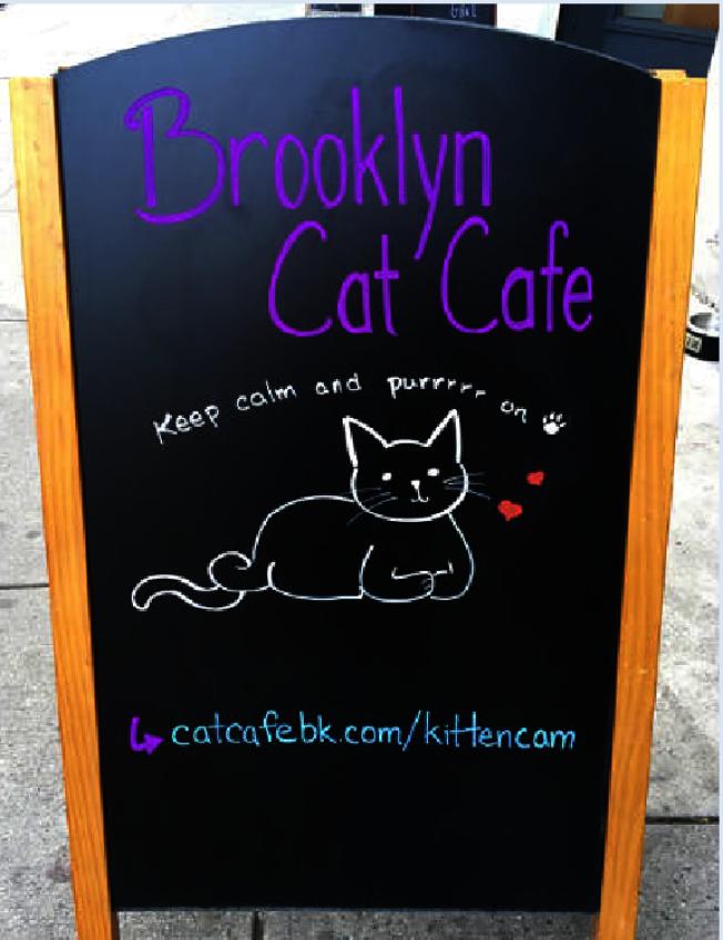 動物救援組織「布碌崙大橋動物福利聯盟」開的咖啡館。(BBAWC臉書)