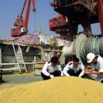 貿易戰兩手策略 王毅向美示好 北京令多種大豆