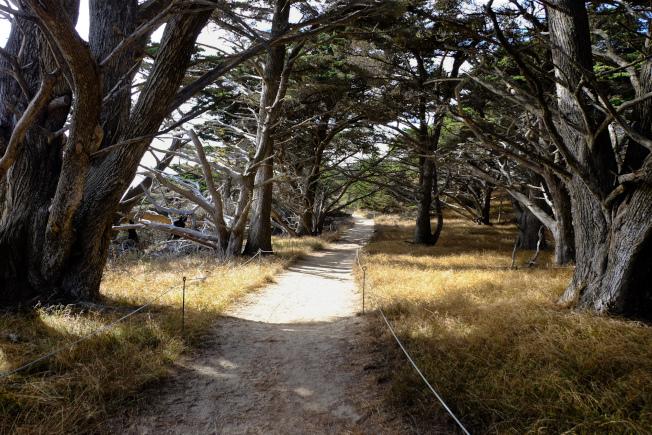 金冠柏樹林步道。