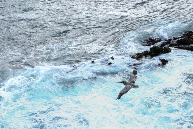 羅伯斯角自然保護區的海鳥。