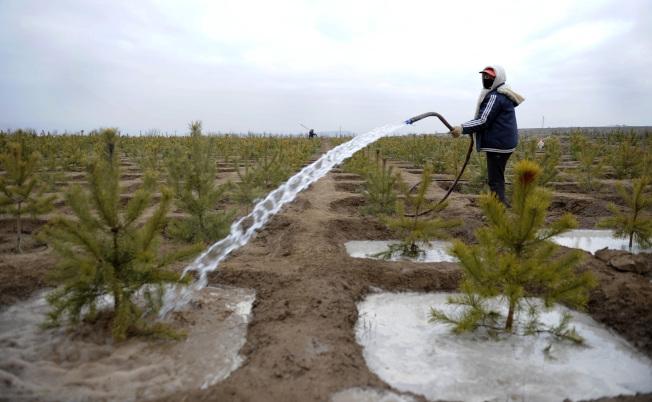 寧夏是中國土地沙化最為嚴重的省區之一,圖為造林隊隊員在給剛種下不久的樟子松澆水。(新華社資料照片)