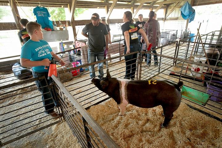 非洲豬瘟若傳入,將嚴重打擊豬農生計。圖為愛阿華州一家養豬場。(Getty Images)