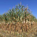 帶動農業革命!新微生物(取代化肥)更環保