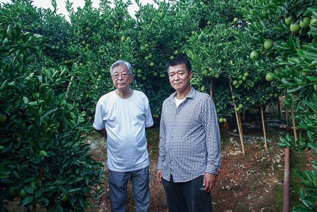 褚时健父子在果园。 (取材自澎湃新闻/视觉中国图)