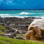 拉丁假期遊巨龜島 早鳥有優惠