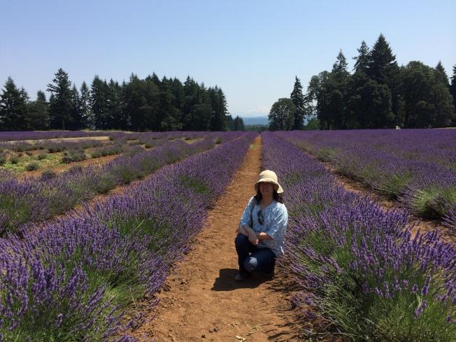俄勒岡州的薰衣草田。(作者提供)