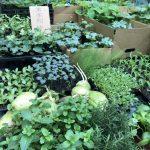 藥草養生術|春暖花開 動動手改造後花園