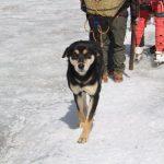 神奇流浪狗 無裝備攀7000米高峰