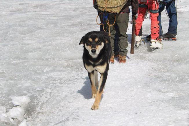 流浪犬梅拉征服海拔7000多公尺的高峰。(取材自臉書)