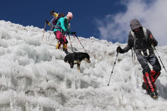 梅拉沿路跟著登山隊,被視為吉祥物。(取材自臉書)