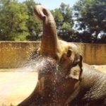 憂鬱大象 獨居43年安樂死