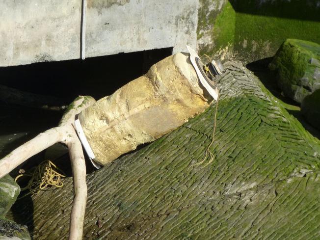网友发现在35号码头岸边有不少遭到河水冲刷上岸的垃圾。(截自推特)