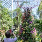 城市傳真 | 寒冬植物園 邂逅百變蘭花