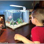 抱金魚一起睡 男童呵護寵物鬧命案