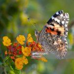 今冬大雨 引出10億蝴蝶遷徙潮