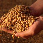 非洲豬瘟疫情衝擊黃豆需求 中國對美貿易承諾遭質疑
