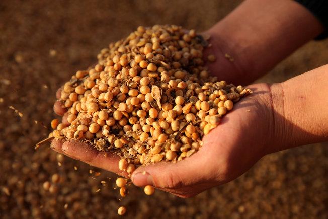 中國2月黃豆進口年減17%,創四年來同月最低。路透