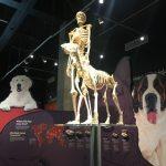 加州科學中心「互動狗狗展」 拉進寵物關係