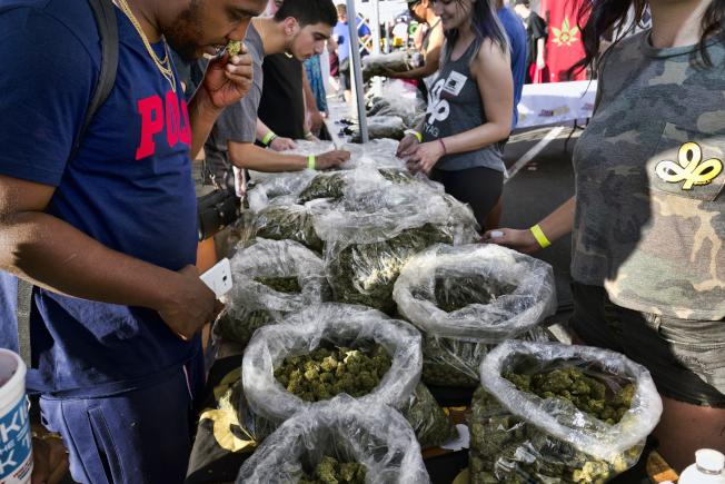 大麻是美國非正式統計就業成長最快的產業。(美聯社)