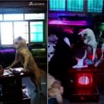 大白狗監督小主人寫功課 網友:當狗也不容易