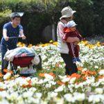 春暖花開「賞花」 當心雙重刺激誘發氣喘