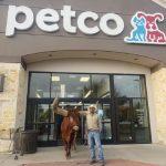 「牽繩寵物都歡迎」 725公斤長角牛  踢館寵物店