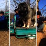 與「犬中之王」同坐 老農矮上一個頭