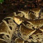 蛇類出沒季節來臨 遊人當心